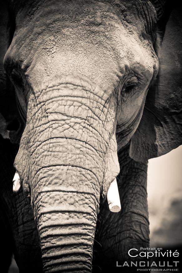 tableau elephant noir et blanc beautiful tableau lphant with tableau elephant noir et blanc. Black Bedroom Furniture Sets. Home Design Ideas